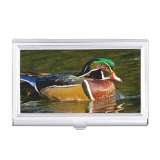 Wood Duck swimming, Crystal Springs Rhododendron Business Card Holder