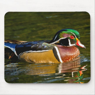 Wood Duck swimming, Crystal Springs Rhododendron Mouse Mat