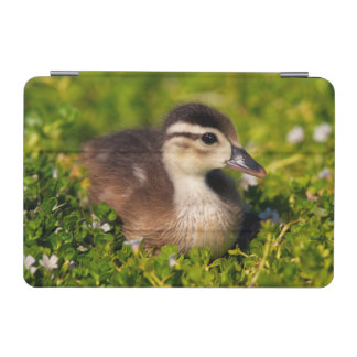 Wood duckling on the shoreline of Lindo Lake iPad Mini Cover