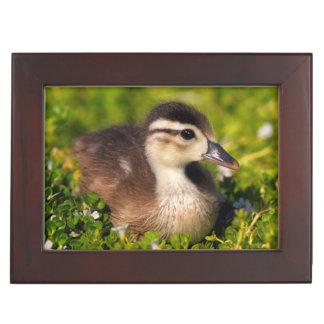 Wood duckling on the shoreline of Lindo Lake Keepsake Box
