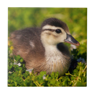 Wood duckling on the shoreline of Lindo Lake Small Square Tile