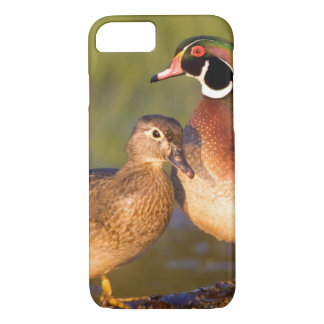 Wood Ducks and female on log in wetland iPhone 8/7 Case