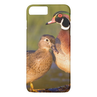 Wood Ducks and female on log in wetland iPhone 8 Plus/7 Plus Case