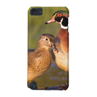 Wood Ducks and female on log in wetland iPod Touch (5th Generation) Cases