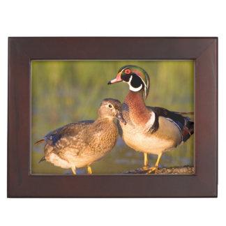 Wood Ducks and female on log in wetland Keepsake Box