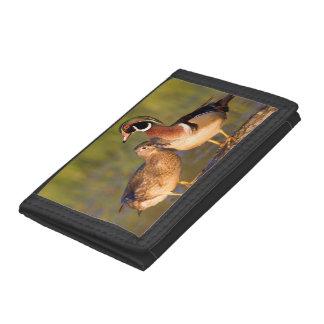 Wood Ducks and female on log in wetland Tri-fold Wallet