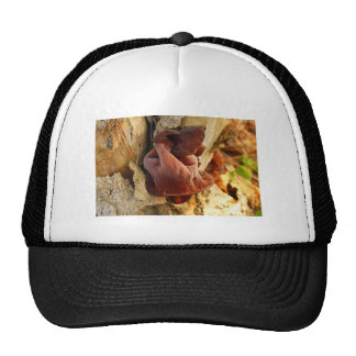 Wood Ear Mushroom Mesh Hat