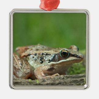 Wood frog. Rana sylvatica Christmas Ornament