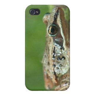 Wood frog. Rana sylvatica iPhone 4/4S Case