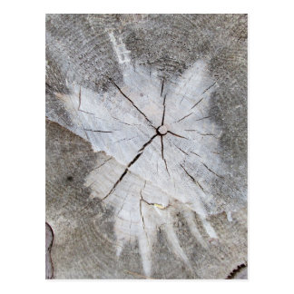 Wood Grain Gray Pine Tree Stump Photo Art 2 Postcard