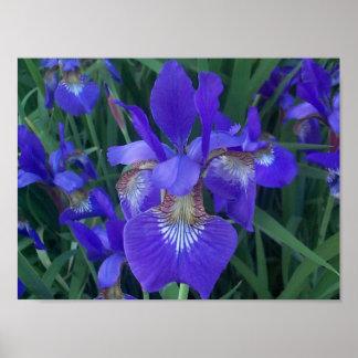 Wood Iris Print
