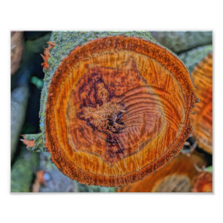 Wood logs photo art
