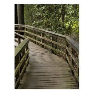 Wood Path Postcard