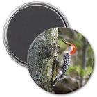 wood pecker - red bellied magnet