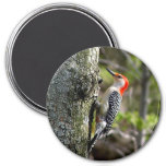wood pecker - red bellied magnets
