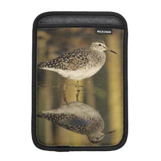 Wood Sandpiper, Tringa glareola,adult, Samos, iPad Mini Sleeve