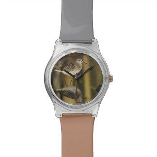 Wood Sandpiper, Tringa glareola,adult, Samos, Watch