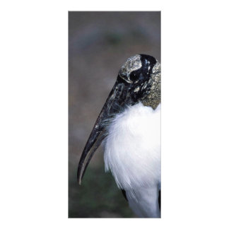 Wood Stork 10 Cm X 23 Cm Rack Card