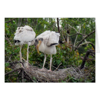 Wood Stork Greeting Card