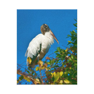 Wood Stork in a Tree Canvas Print