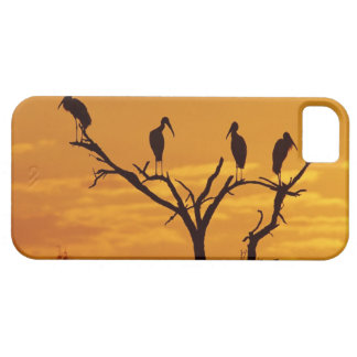 Wood Stork, Mycteria americana,adults at Case For The iPhone 5