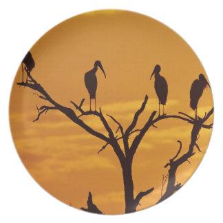 Wood Stork, Mycteria americana,adults at Plate