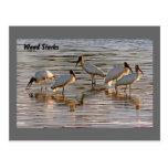 Wood Storks at Dusk Postcard