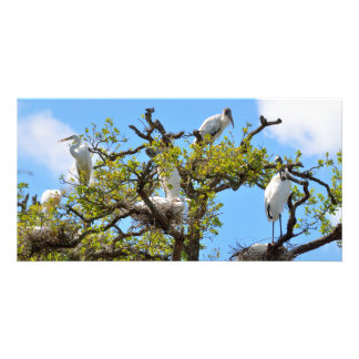 Wood Storks nesting Photo Card Template