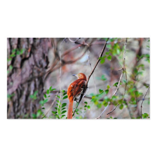 Wood Thrush Bird on Branch 2 Pack Of Standard Business Cards