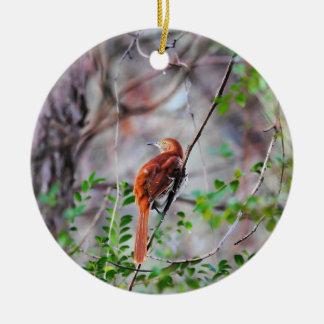 Wood Thrush Bird on Branch 2 Round Ceramic Decoration