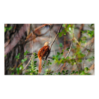 Wood Thrush Bird on Branch Pack Of Standard Business Cards