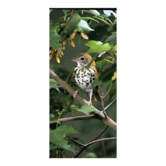 Wood Thrush Full Color Rack Card