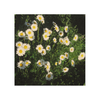 Wood Wall Art - Daisy photograph