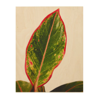 Wood Wall Art of Tropical Plant Red Aglaonema