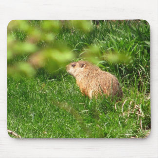 Woodchuck ~ mousepad
