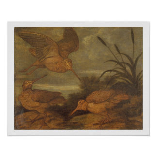 Woodcock at Dusk, c.1676 (oil on canvas) Poster