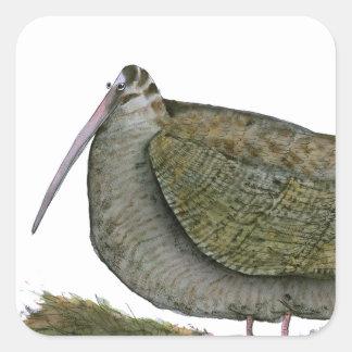 woodcock bird, tony fernandes square sticker