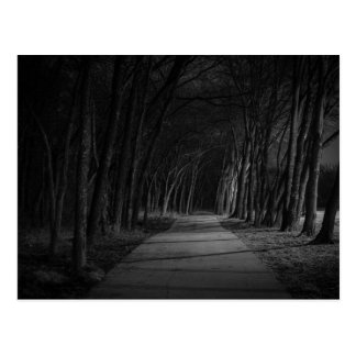 Wooded Path Postcard