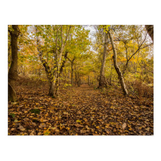 """Wooded Path"" postcards"