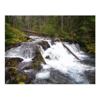 Wooded Stream Postcard