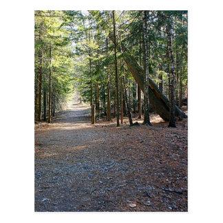 Wooded Trail Postcard