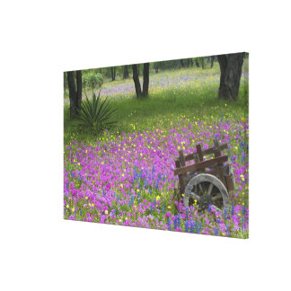 Wooden Cart in field of Phlox, Blue Bonnets Canvas Print