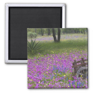 Wooden Cart in field of Phlox, Blue Bonnets with Square Magnet