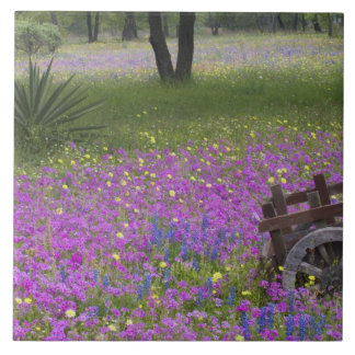 Wooden Cart in field of Phlox, Blue Bonnets with Tile