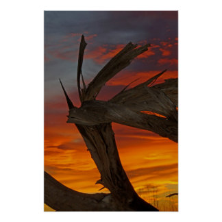 Wooden Dragon Poster