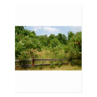 Wooden Fence and Meadow Postcard