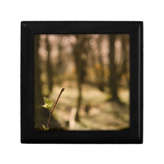 Woodland Dreaming Small Square Gift Box