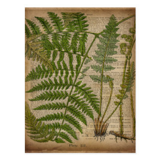 woodland foliage french botanical print fern postcard
