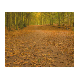 """Woodland in autumn"" design wall art"