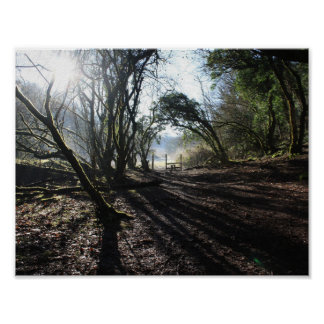 woodland in winter art poster